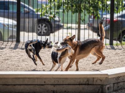 VII. fejezet: A kutyatartás szabályai