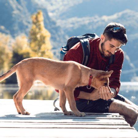 I. fejezet: A kutyaválasztás szempontjai