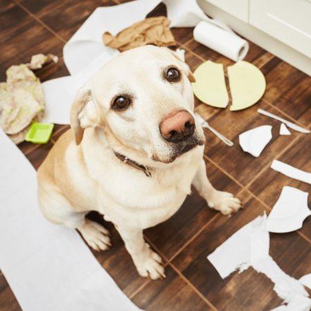 IV. fejezet: A kutya viselkedése és nevelése