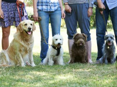 V. fejezet: A kutya nevelése